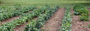 cropped-Veggie-Garden.jpg