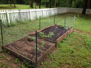 Side view of the garden as of July 20