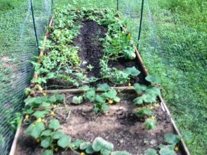 Garden on August 18