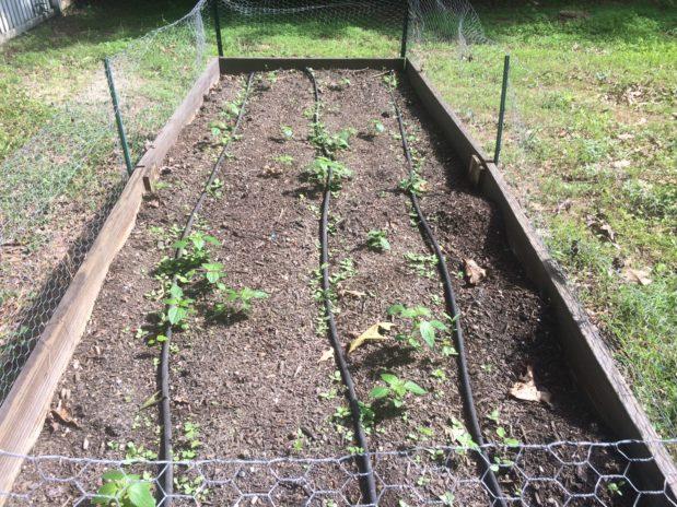 Still Making Rookie Gardening Mistakes